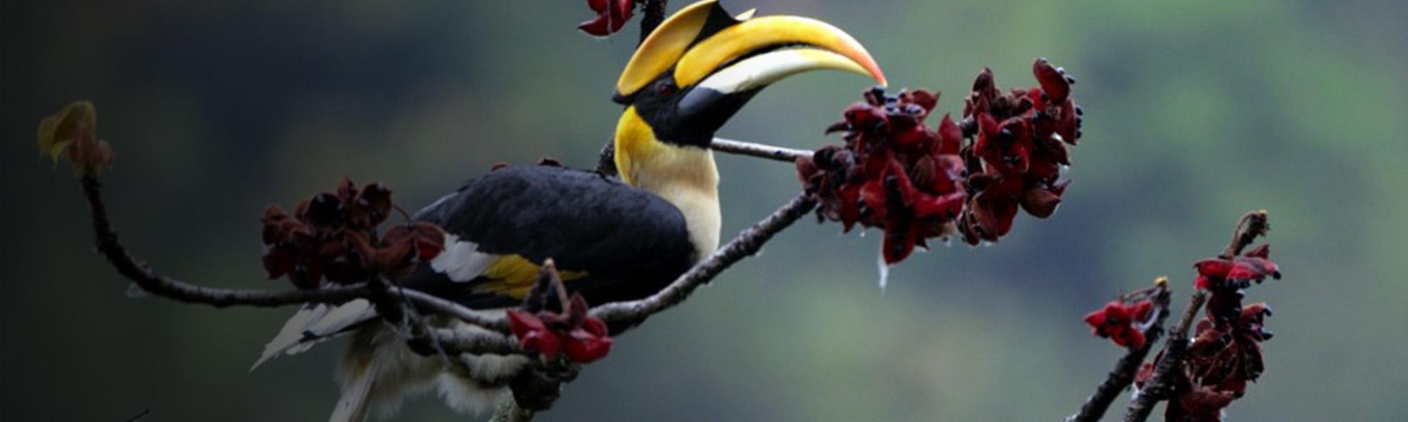 Bhutan Birdwatching Tour
