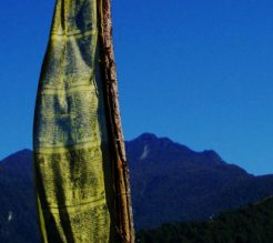Bhutan Nabji Korphu Trek